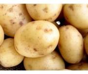 Картофель молодой белый (Краснодар)