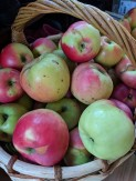 Яблоки (сорт Богатырь)